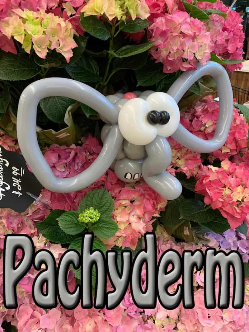Pachyderm - Petal Pals